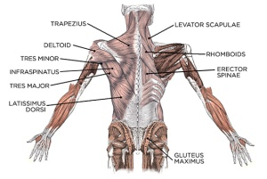 build-a-better-back-balanced-back-workout-and-training-guide_a